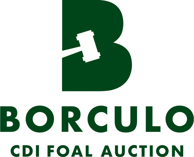 Borculo Online Foal Auction
